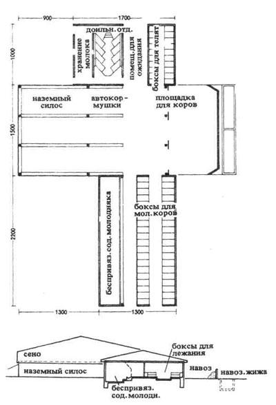 Схема расположения в коровнике